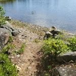 Upper Lead Mountain Pond: Lovely cottage, drilled & bath, furnished